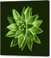 Greenery Succulent Echeveria Agavoides Flower Canvas Print