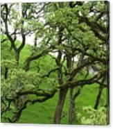Greening Up Canvas Print