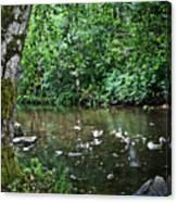 Greenwood Creek Canvas Print