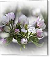 greeting card - Apple Blossoms  Canvas Print