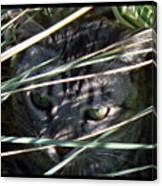 Greeting Card - Joe Joe In The Grass Canvas Print