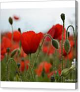 Greeting Card - Poppies In France Canvas Print
