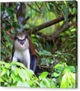 Grenada Monkey 2 Canvas Print
