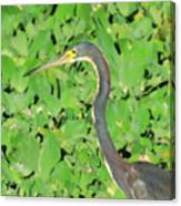 Grey Crane On Green Canvas Print
