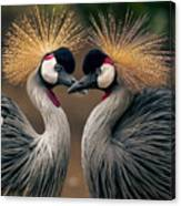 Grey Crowned Cranes Of Africa Canvas Print