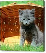 Grey Fluffy Kitten In Market Basket Canvas Print