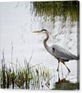 Grey Heron #3 Canvas Print