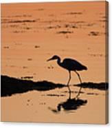 Grey Heron Sunset Canvas Print