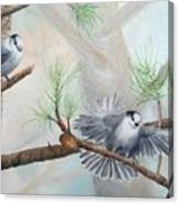 Grey Jays In A Jack Pine Canvas Print