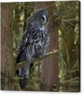 Grey Owl 4 Canvas Print