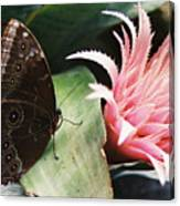 Grey Pansy Pink Bromeliad Canvas Print