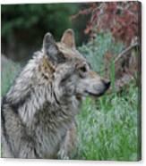 Grey Wolf Profile 2 Canvas Print