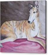Greyhound Number 2 Canvas Print