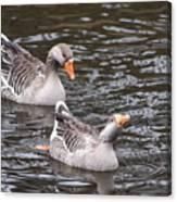 Greylag Geese Canvas Print