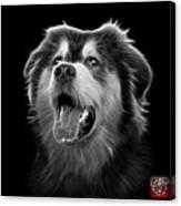 Greyscale Malamute Dog Art - 6536 - Bb Canvas Print