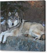 Grizzer Intelligence Personified Canvas Print