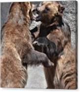 Grizzlies' Playtime 3 Canvas Print