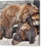 Grizzlies' Playtime 5 Canvas Print