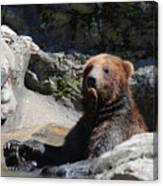 Grizzlies Snacking On Things They Find In A River Canvas Print