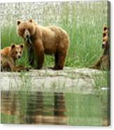 Grizzly Bear Family  Canvas Print