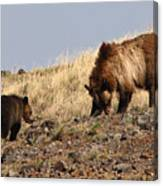 Grizzly Bear Mother And Cub Canvas Print