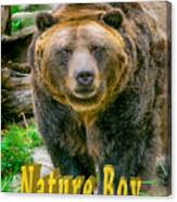 Grizzly Bear Nature Boy    Canvas Print