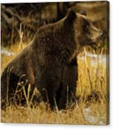 Grizzly Bear-signed-#6672 Canvas Print
