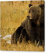 Grizzly Bear-signed-#6721 Canvas Print