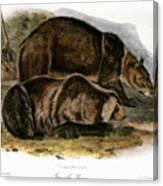 Grizzly Bear (ursus Ferox) Canvas Print