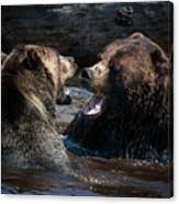 Grizzly Bears Canvas Print