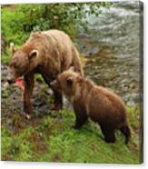 Grizzly Dinner For Two Canvas Print