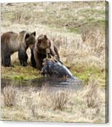 Grizzly Dinner Canvas Print