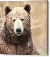 Grizzly Portrait Canvas Print