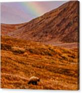 Grizzly Under The Rainbow Canvas Print