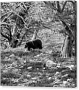 Grizzly Walking Through Dead Trees - Black And White Canvas Print