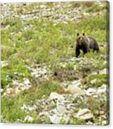 Grizzly Watching People Watching Grizzly No. 2 Canvas Print