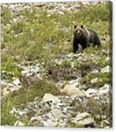 Grizzly Watching People Watching Grizzly No. 3 Canvas Print