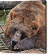 Grizzly's Naptime Canvas Print