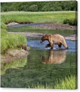 Grizzy Bear Crossing The River Canvas Print
