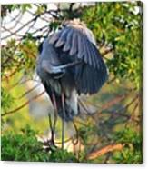 Grooming Blue Heron Canvas Print