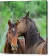 Grooming Horses Canvas Print