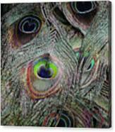 Groovy Peacock Canvas Print