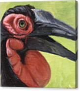 Ground Hornbill Canvas Print