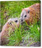 Groundhog Mother Love Canvas Print
