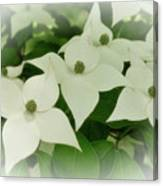 Group Of Chinese Dogwoods Canvas Print