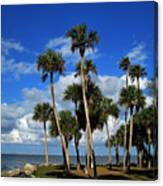 Group Of Palms Canvas Print