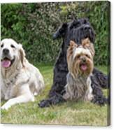 Group Of Three Dogs Canvas Print