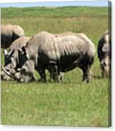 Group Of White Rhino Canvas Print