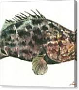 Grouper Fish Canvas Print