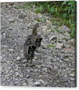 Grouse Pair Canvas Print